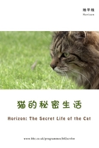 猫的秘密生活/The Secret Life of the Cat (2013)